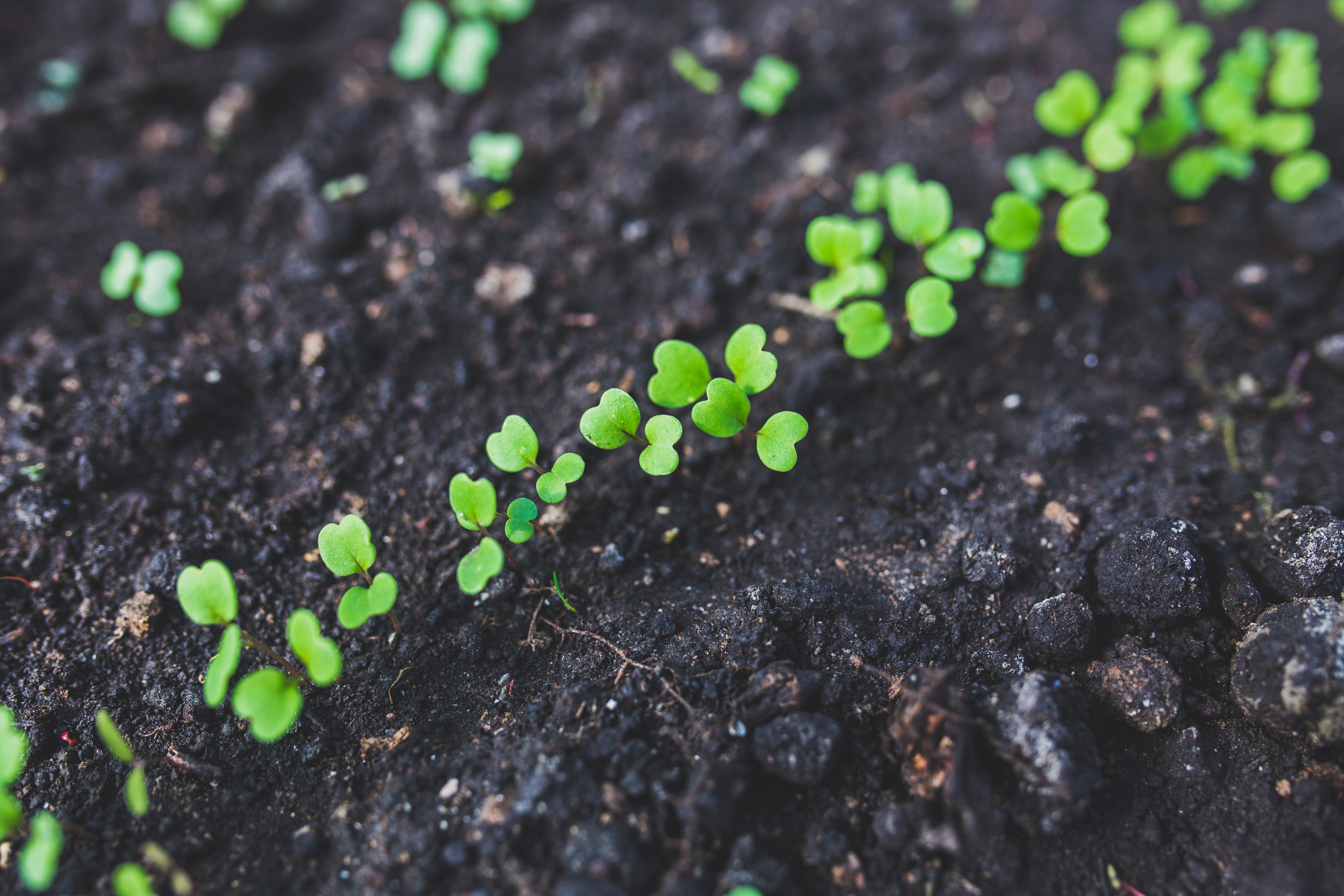 soil flourish articles garden compost img your natural amendments to home and gardening make